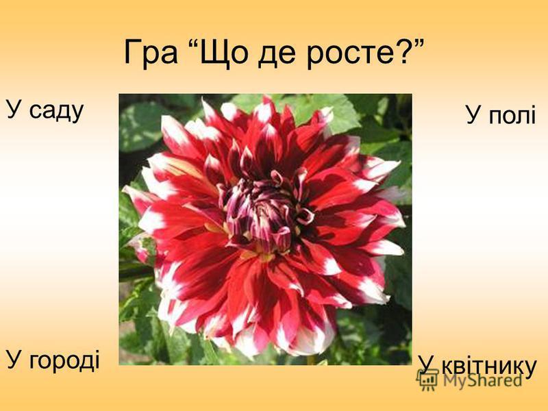 Гра Що де росте? У городі У саду У квітнику У полі