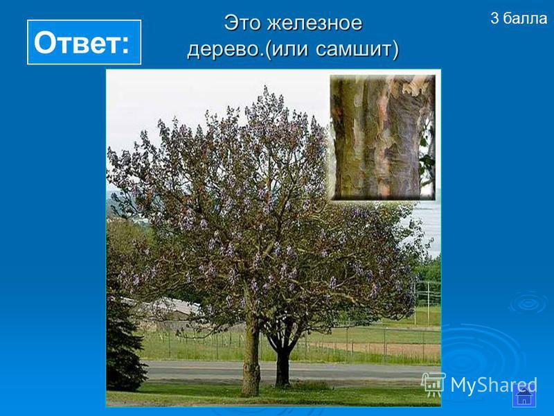 Ответ: Это железное дерево.(или самшит) 3 балла