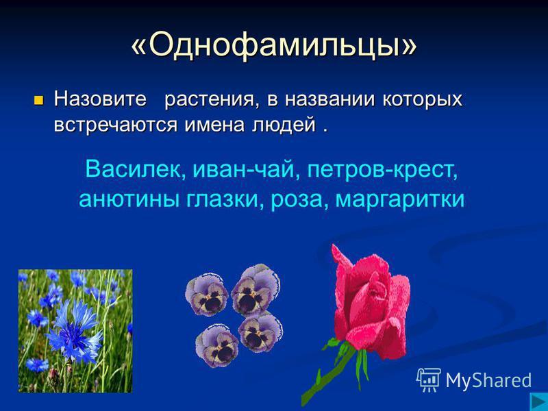 «Однофамильцы» Назовите растения, в названии которых встречаются имена людей. Назовите растения, в названии которых встречаются имена людей. Василек, иван-чай, петров-крест, анютины глазки, роза, маргаритки