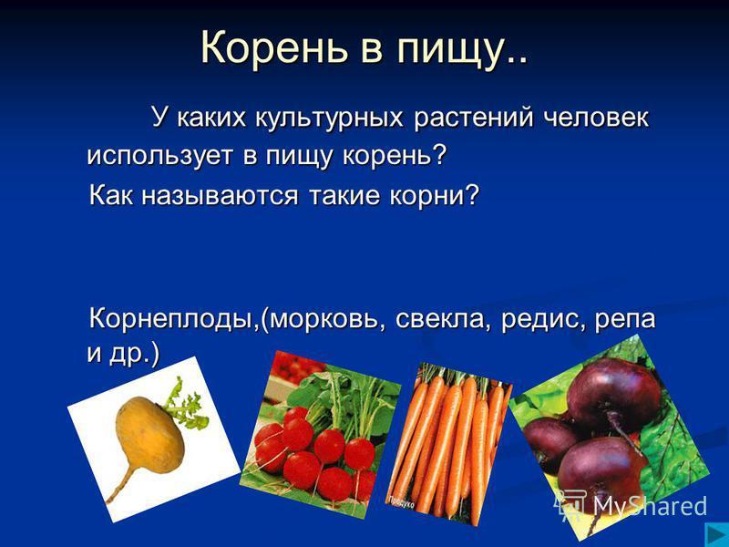 Корень в пищу.. У каких культурных растений человек использует в пищу корень? У каких культурных растений человек использует в пищу корень? Как называются такие корни? Корнеплоды,(морковь, свекла, редис, репа и др.)