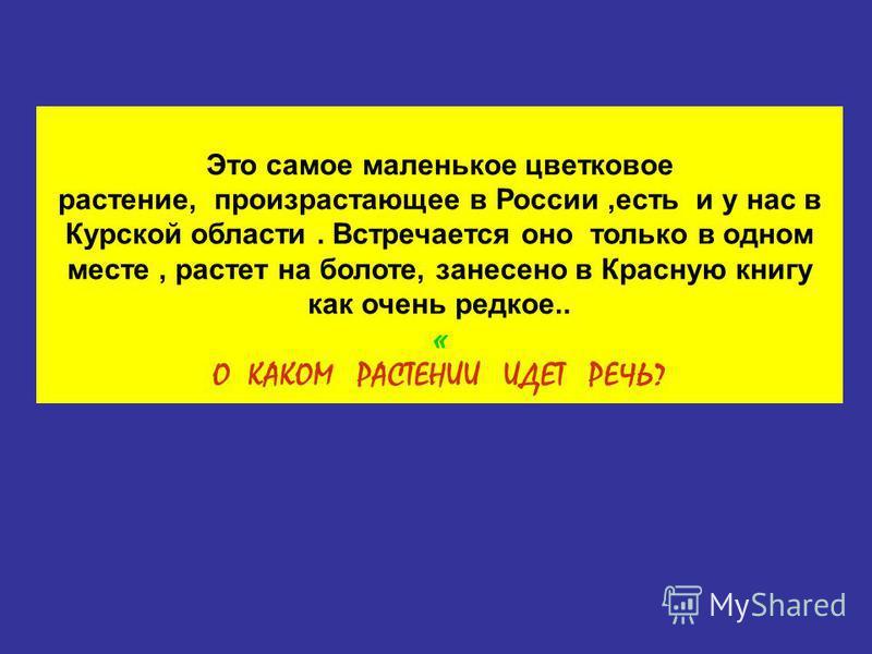Это самое маленькое цветковое растение, произрастающее в России,есть и у нас в Курской области. Встречается оно только в одном месте, растет на болоте, занесено в Красную книгу как очень редкое.. « О КАКОМ РАСТЕНИИ ИДЕТ РЕЧЬ?