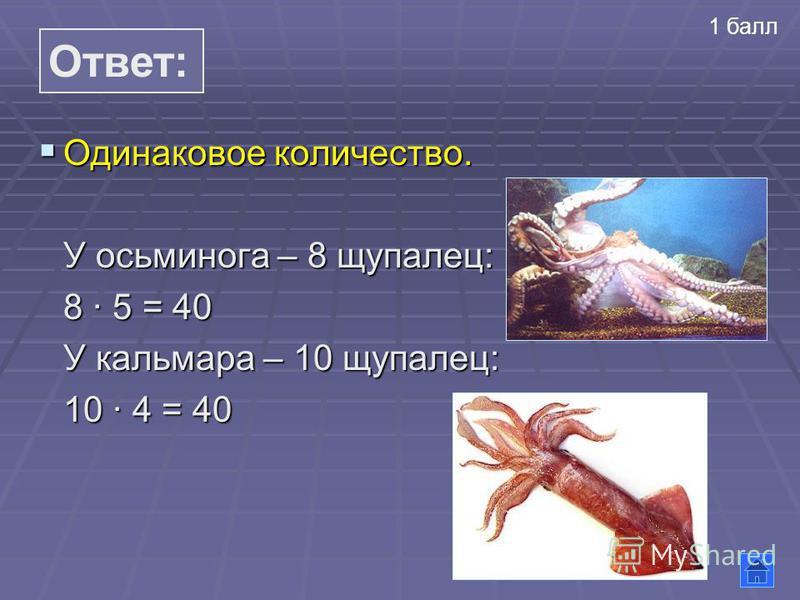 Ответ: Одинаковое количество. Одинаковое количество. У осьминога – 8 щупалец: 8 5 = 40 У кальмара – 10 щупалец: 10 4 = 40 1 балл