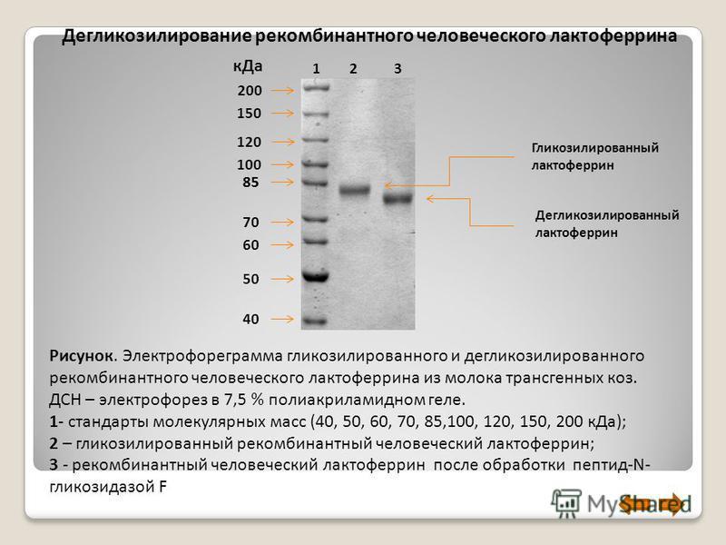 Дегликозилирование рекомбинантного человеческого лактоферрина 200 150 120 100 85 70 60 50 40 Гликозилированный лактоферрин 1 2 3 Рисунок. Электрофореграмма гликозилированного и дегликозилированного рекомбинантного человеческого лактоферрина из молока