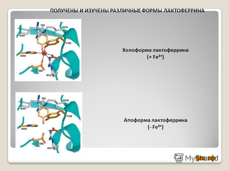 Холоформа лактоферрина (+ Fe 3+ ) Апоформа лактоферрина (- Fe 3+ ) ПОЛУЧЕНЫ И ИЗУЧЕНЫ РАЗЛИЧНЫЕ ФОРМЫ ЛАКТОФЕРРИНА