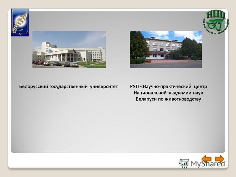 РУП «Научно-практический центр Национальной академии наук Беларуси по животноводству Белорусский государственный университет