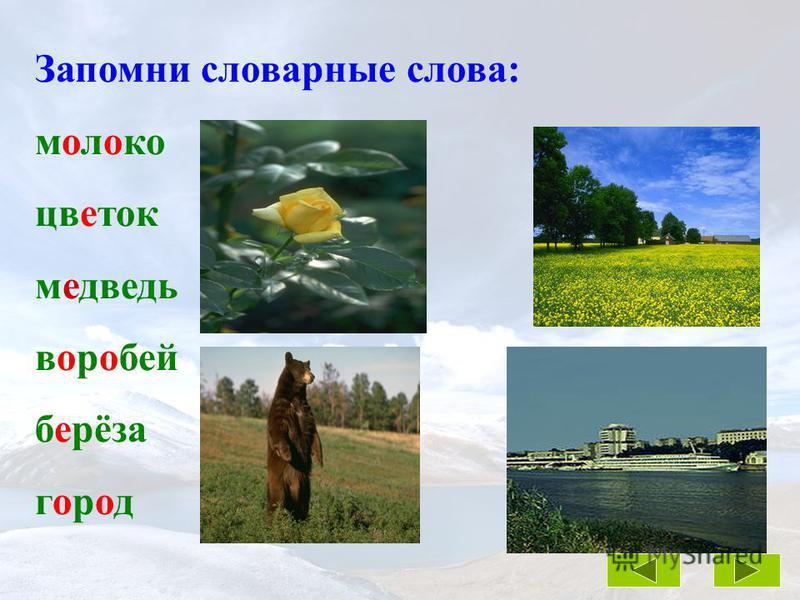 тигр Шерхан лев Борис собака Лайка кот Пушок
