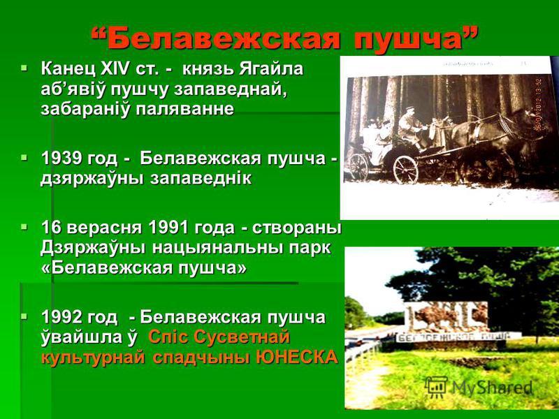 Белавежская пушча (гісторыя) 983 год – першае упамінанне пра пушчу. 983 год – першае упамінанне пра пушчу. Месца паляўнічай забавы. Месца паляўнічай забавы.