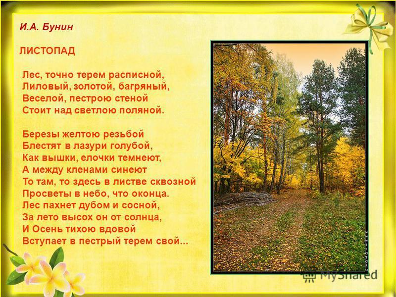 И.А. Бунин ЛИСТОПАД Лес, точно терем расписной, Лиловый, золотой, багряный, Веселой, пестрою стеной Стоит над светлою поляной. Березы желтою резьбой Блестят в лазури голубой, Как вышки, елочки темнеют, А между кленами синеют То там, то здесь в листве