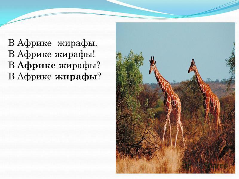 В Африке жирафы. В Африке жирафы! В Африке жирафы?