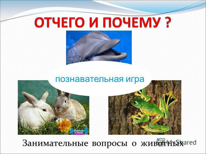 Занимательные вопросы о животных познавательная игра