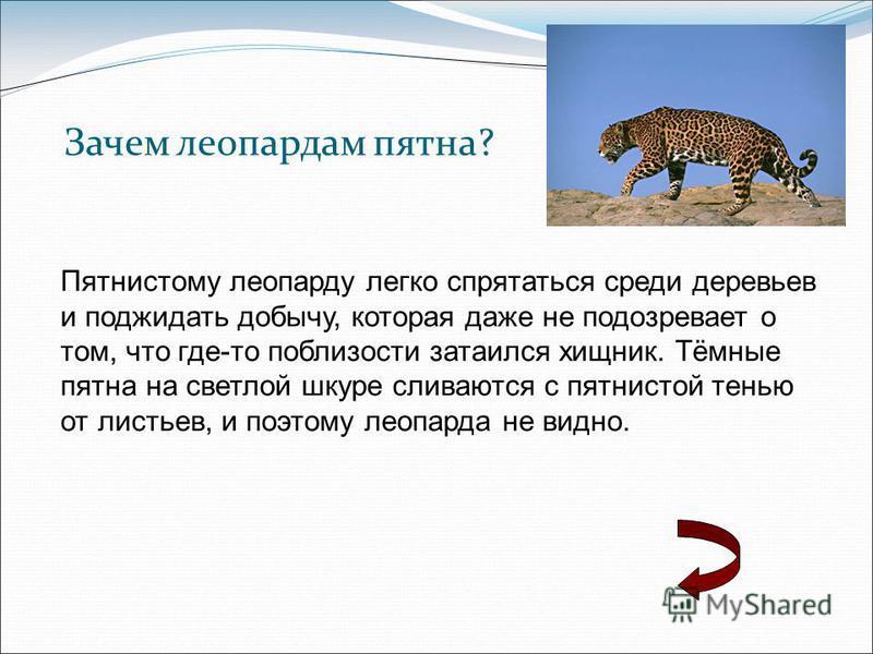 Зачем леопардам пятна? Пятнистому леопарду легко спрятаться среди деревьев и поджидать добычу, которая даже не подозревает о том, что где-то поблизости затаился хищник. Тёмные пятна на светлой шкуре сливаются с пятнистой тенью от листьев, и поэтому л