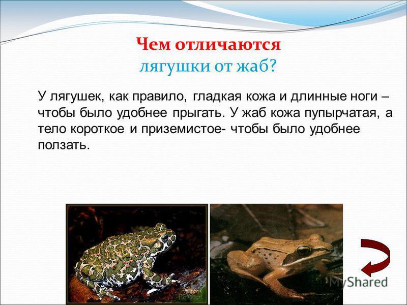 Чем отличаются лягушки от жаб? У лягушек, как правило, гладкая кожа и длинные ноги – чтобы было удобнее прыгать. У жаб кожа пупырчатая, а тело короткое и приземистое- чтобы было удобнее ползать.