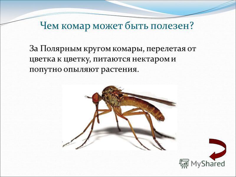 Чем комар может быть полезен? За Полярным кругом комары, перелетая от цветка к цветку, питаются нектаром и попутно опыляют растения.
