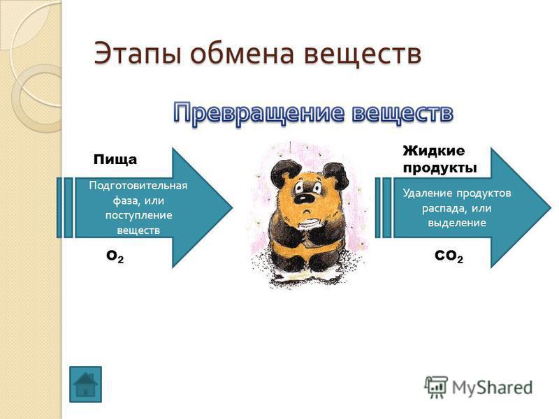 Этапы обмена веществ Пища О2О2 Подготовительная фаза, или поступление веществ Удаление продуктов распада, или выделение СО 2 Жидкие продукты