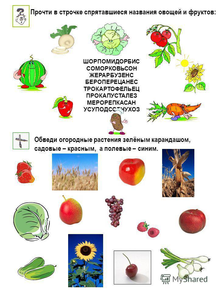 Обведи огородные растения зелёным карандашом, садовые – красным, а полевые – синим. ШОРПОМИДОРБИС СОМОРКОВЬСОН ЖЕРАРБУЗЕНС БЕРОПЕРЕЦАНЕС ТРОКАРТОФЕЛЬЕЦ ПРОКАПУСТАЛЕЗ МЕРОРЕПКАСАН УСУПОДСОЛНУХОЗ Прочти в строчке спрятавшиеся названия овощей и фруктов: