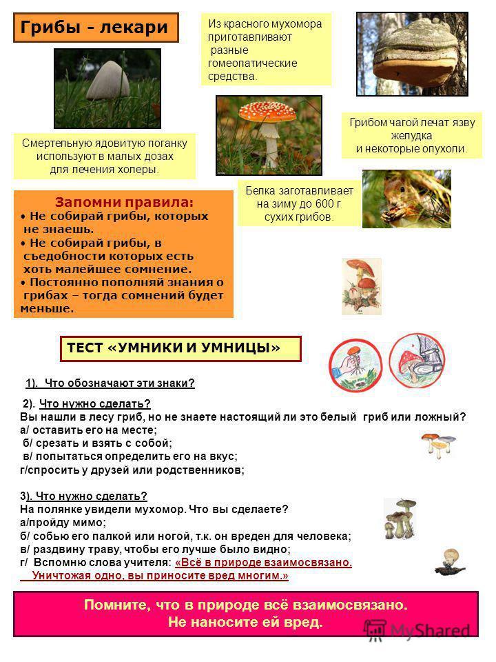 Смертельную ядовитую поганку используют в малых дозах для лечения холеры. Из красного мухомора приготавливают разные гомеопатические средства. Грибом чагой лечат язву желудка и некоторые опухоли. Белка заготавливает на зиму до 600 г сухих грибов. Гри