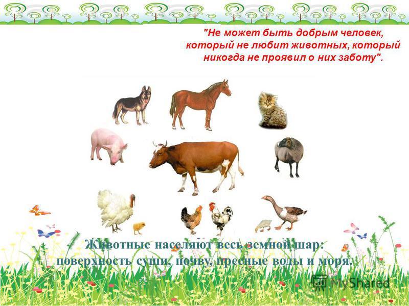 Животные населяют весь земной шар: поверхность суши, почву, пресные воды и моря. Не может быть добрым человек, который не любит животных, который никогда не проявил о них заботу.