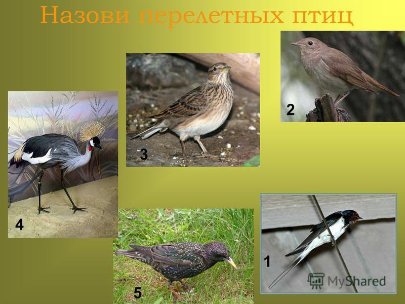 Назови перелетных птиц 3 2 5 4 1
