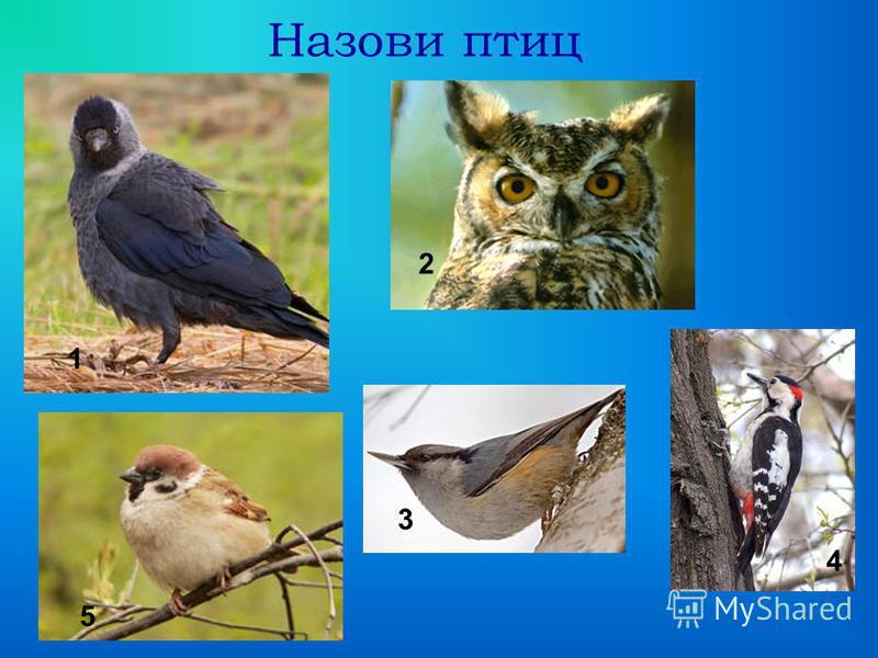 Назови птиц 1 2 3 4 5