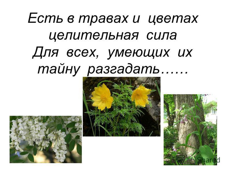 Есть в травах и цветах целительная сила Для всех, умеющих их тайну разгадать……