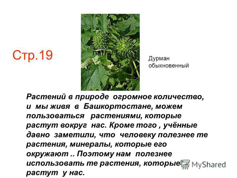 Растений в природе огромное количество, и мы живя в Башкортостане, можем пользоваться растениями, которые растут вокруг нас. Кроме того, учённые давно заметили, что человеку полезнее те растения, минералы, которые его окружают.. Поэтому нам полезнее