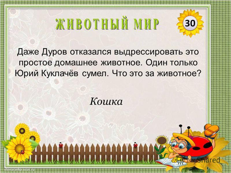 Кошка Даже Дуров отказался выдрессировать это простое домашнее животное. Один только Юрий Куклачёв сумел. Что это за животное? 30