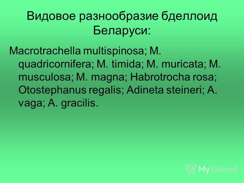 Видовое разнообразие бделлоид Беларуси: Macrotrachella multispinosa; M. quadricornifera; M. timida; M. muricata; M. musculosa; M. magna; Habrotrocha rosa; Otostephanus regalis; Adineta steineri; A. vaga; A. gracilis.