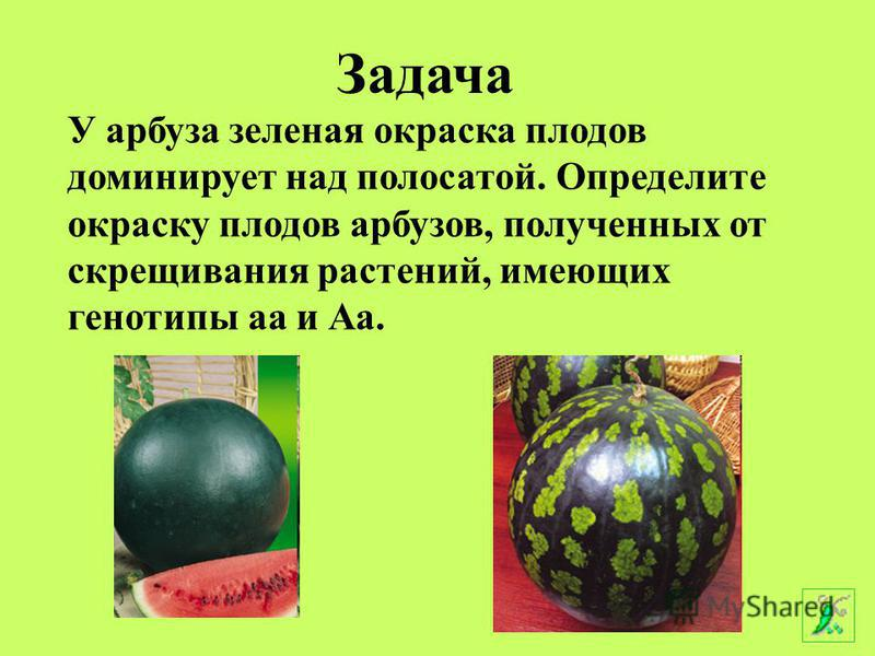 У арбуза заленая окраска плодов доминирует над полосатой. Определите окраску плодов арбузов, полученных от скрещивания растений, имеющих генотипы а и Аа. Аа Задача