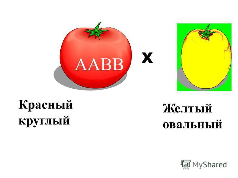 ААВВ авв Р. Х Красный круглый Желтый овальный