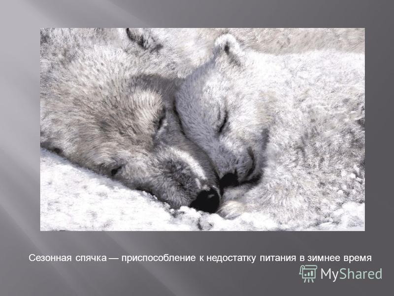 Сезонная спячка приспособление к недостатку питания в зимнее время