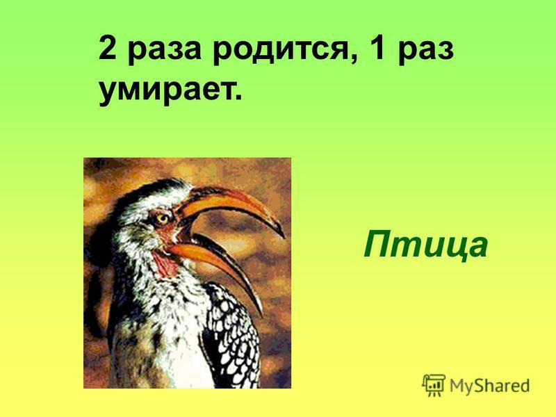 2 раза родится, 1 раз умирает. Птица