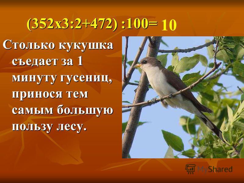 (352 х 3:2+472) :100= Столько кукушка съедает за 1 минуту гусениц, принося тем самым большую пользу лесу. 10