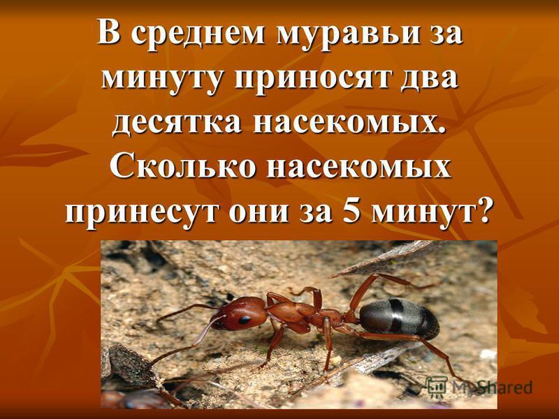 В среднем муравьи за минуту приносят два десятка насекомых. Сколько насекомых принесут они за 5 минут?