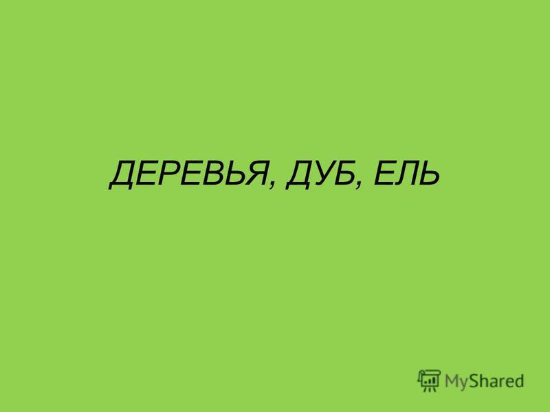 ДЕРЕВЬЯ, ДУБ, ЕЛЬ