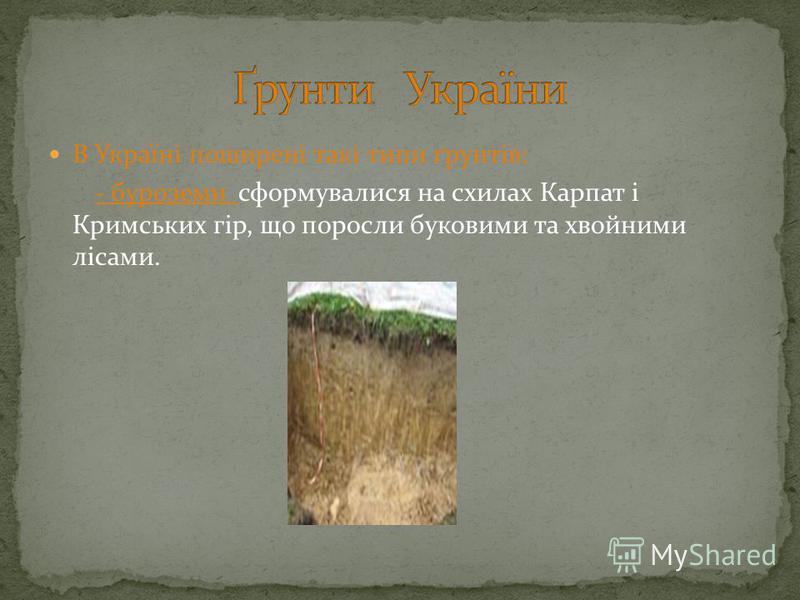 В Україні поширені такі типи ґрунтів: - буроземи сформувалися на схилах Карпат і Кримських гір, що поросли буковими та хвойними лісами.