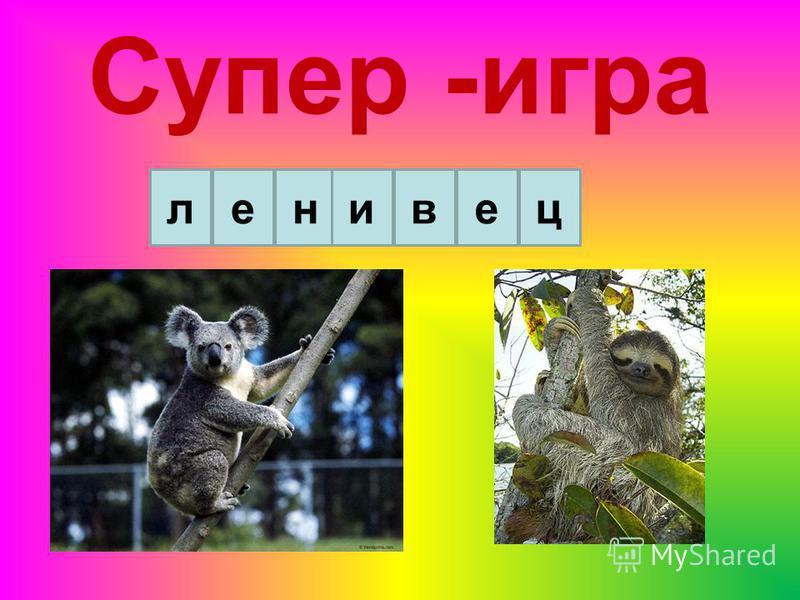 ленивце