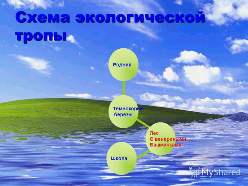 Схема экологической тропы Лес С венериными Башмачками. Школа Темнокорые березы Родник