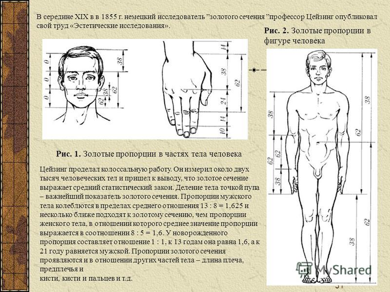 31 В середине XIX в в 1855 г. немецкий исследователь золотого сечения профессор Цейзинг опубликовал свой труд «Эстетические исследования». Рис. 1. Золотые пропорции в частях тела человека Рис. 2. Золотые пропорции в фигуре человека Цейзинг проделал к