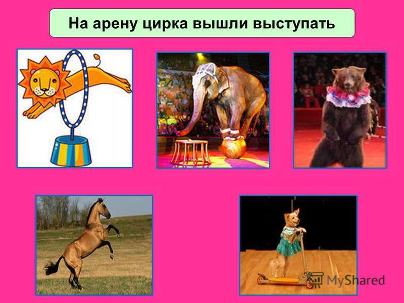 На арену цирка вышли выступать