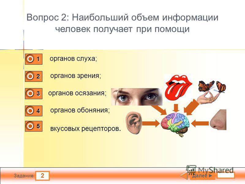 2 Задание Вопрос 2: Наибольший объем информации человек получает при помощи органов слуха; органов зрения; органов осязания; органов обоняния; Далее 1 0 2 1 3 0 4 0 5 0 вкусовых рецепторов.
