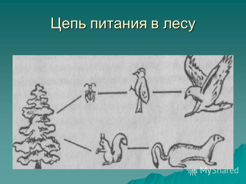 Цепь питания лес схема