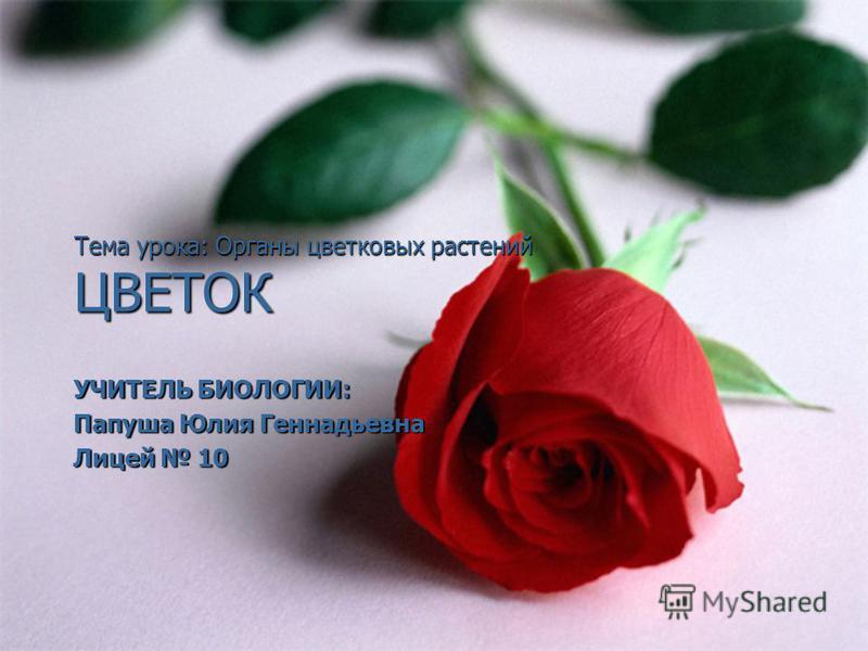 Тема урока: Органы цветковых растений ЦВЕТОК УЧИТЕЛЬ БИОЛОГИИ: Папуша Юлия Геннадьевна Лицей 10