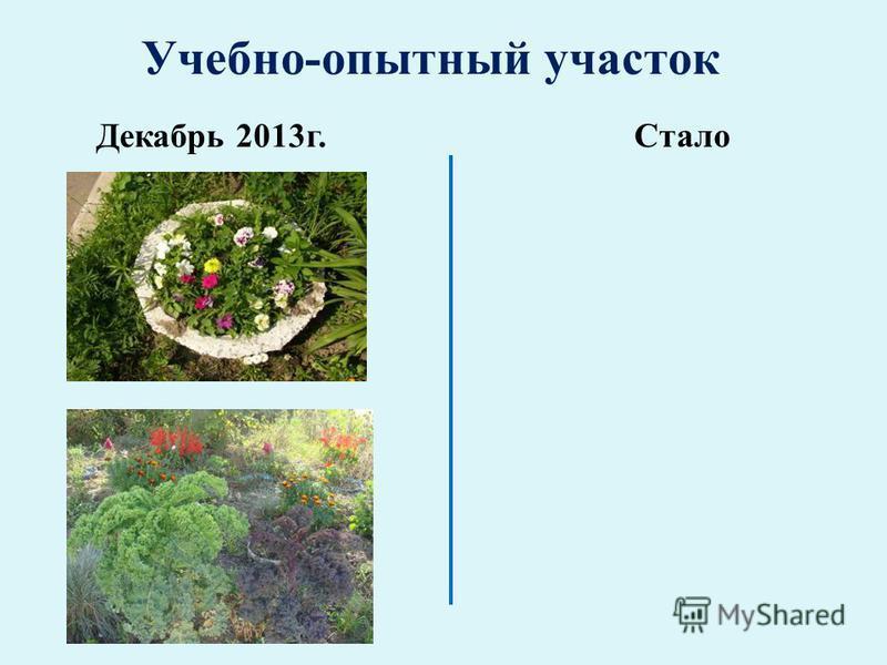 Учебно-опытный участок Декабрь 2013 г. Стало