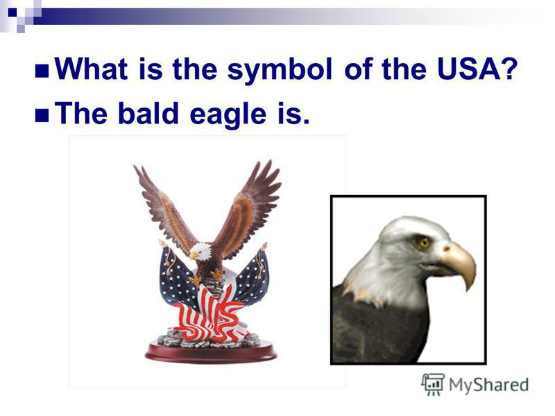 What is the symbol of the USA? The bald eagle is.