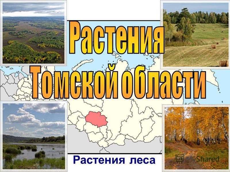 Растения Томской области Растения леса