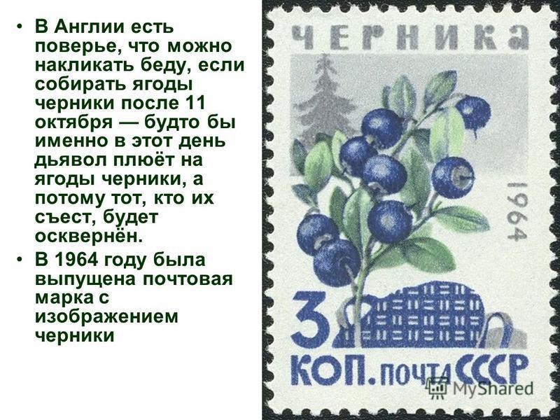 В Англии есть поверье, что можно накликать беду, если собирать ягоды черники после 11 октября будто бы именно в этот день дьявол плюёт на ягоды черники, а потому тот, кто их съест, будет осквернён. В 1964 году была выпущена почтовая марка с изображен