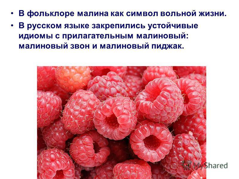 В фольклоре малина как символ вольной жизни. В русском языке закрепились устойчивые идиомы с прилагательным малиновый: малиновый звон и малиновый пиджак.