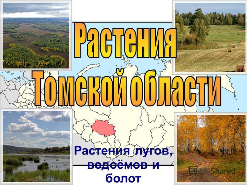 Растения Томской области Растения лугов, водоёмов и болот