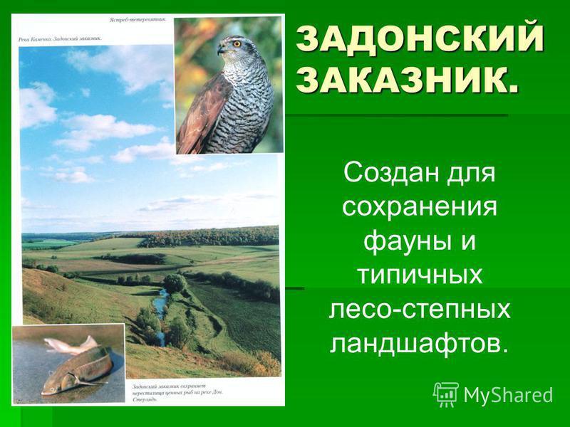 ЗАДОНСКИЙ ЗАКАЗНИК. Создан для сохранения фауны и типичных лесо-степных ландшафтов.