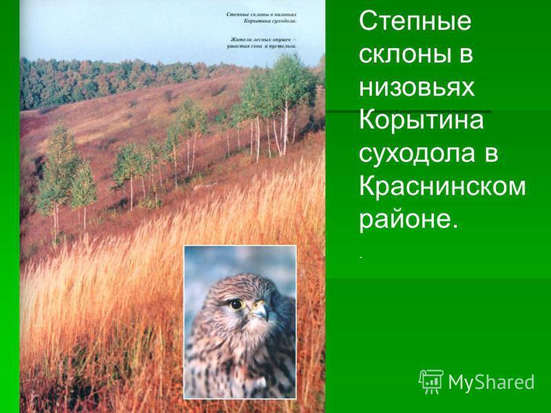 Степные склоны в низовьях Корытина суходола в Краснинском районе..